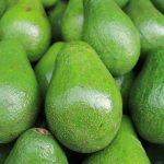Avocado giftig für Ratten