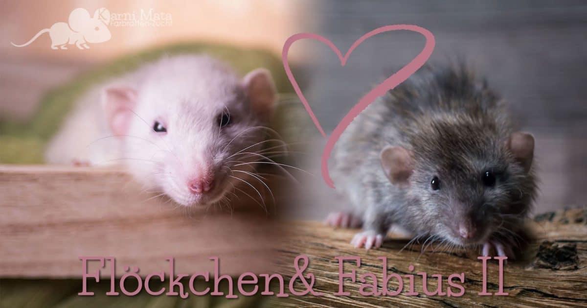 Ratte Flöckchen (Marble Dumbo Velveteen) und Fabius II (Agouti Self Harley Dumbo)