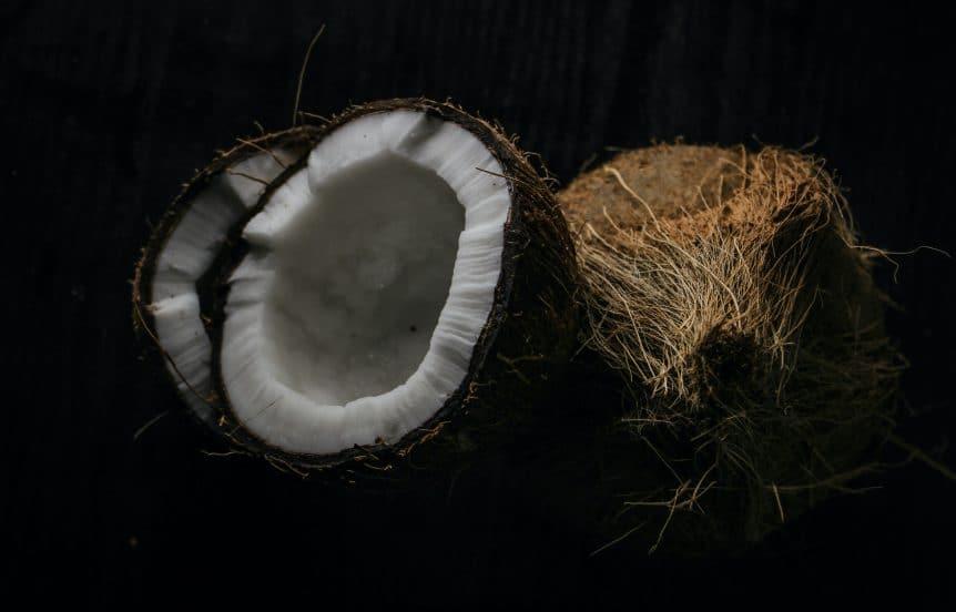 Kokosnuss - Kokosfasereinstreu für Farbratten