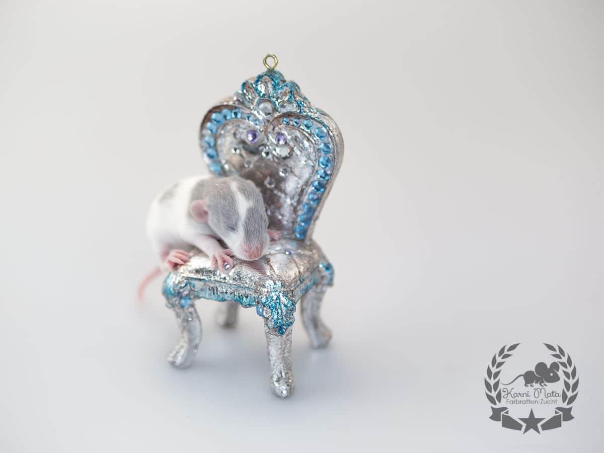 Karni Mata's KM E4 f 05 Tiamat, Farbratte (Fancyrat) Russian Blue Silvermane Variegated Blazed