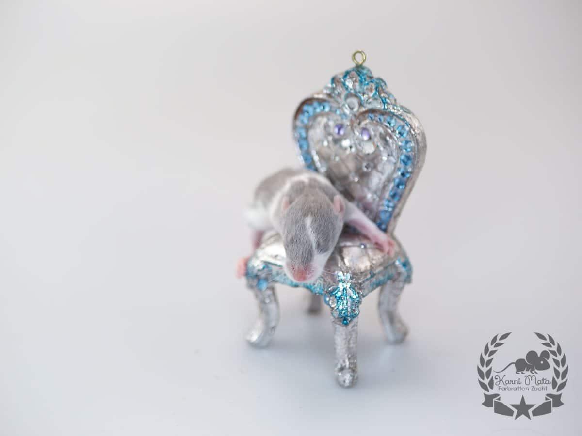 Karni Mata's KM E4 f 06 Xiuhcoatl, Farbratte (Fancyrat) Russian Blue Collared