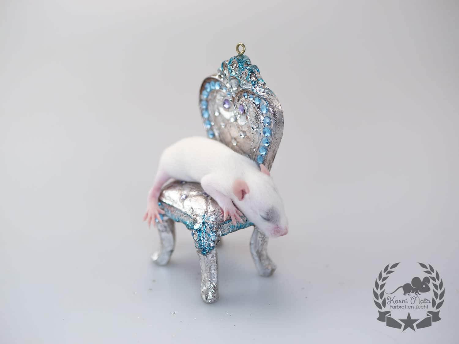 Karni Mata's KM E4 m 03 Long, Farbratte (Fancyrat) Russian Blue Patched