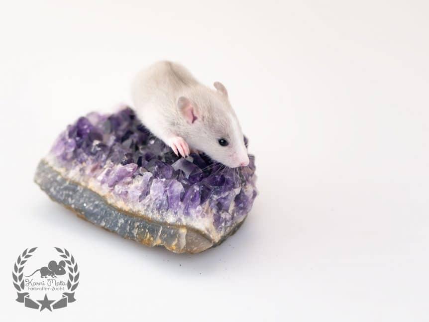 Karni Mata's KM F4 m 04 Thassos Farbartte (Fancyrat) Marble Blazed